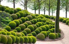 modern ball trees garden