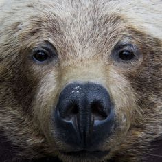 Who Nose: 21 Close-Up Photos From Across the Animal Kingdom #bear