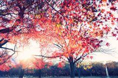[RICOH GR]代々木公園の紅葉が綺麗だったので写真を撮ってきました。 | OZPAの表4