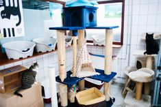 Amsterdam. cat shelter on the barge 17
