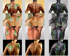Our mission is to empower artists with the know-how books of anatomy Understanding the Human Figure and Anatomy of Facial Expression by Anatomy For Sculptors! Anatomy Back, Anatomy Study, Anatomy Drawing, Human Body Anatomy, Muscle Anatomy, Body Reference, Anatomy Reference, Body Study, Male Figure Drawing