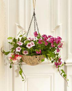 Blumenampel bei Servus am Marktplatz Plants, Home And Garden, Nice Asses, Plant, Planets