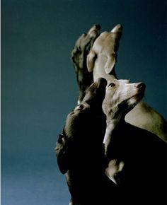 Jo Longhurst: The Refusal (part III)    http://www.jolonghurst.com/docs/projects_images.php?id=1:170:3490:0