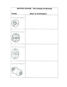 Worksheets Mitosis Review Worksheet homeschool home and schools on pinterest mitosis lesson maybe make this a computer project using the chart