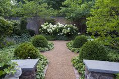 ground cover, boxwood and hydrangeas - Design by Mariani Landscape.