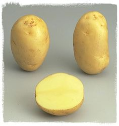 Variété Apollo - Le plant français de pomme de terre