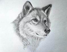 как нарисовать волка - Поиск в Google