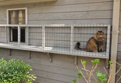 Catios are outdoor enclosures for cats that let them enjoy the outdoors and keep wildlife like birds safe. Learn how to build a catio. playground outdoor diy Catios: A safe way to enjoy nature – Adventure Cats Adventure Cat, Nature Adventure, Outdoor Cat Enclosure, Diy Cat Enclosure, Reptile Enclosure, Cat Window, Window Sill, Cat Playground, Outdoor Cats