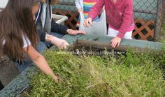 Weeding the garden box in preparation for planting beans and flowers.