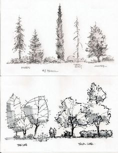 Image result for landscape sections quick plants