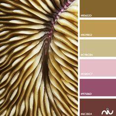 Coral Color Palette