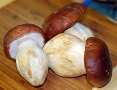 Grow Porcini Mushrooms At Home: Grow Porcini Mushrooms At Home