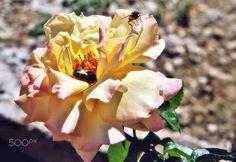 Pollinisation - null