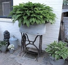 Another idea for an old sewing machine table base! Fabulous galvanized tub filled with hostas sitting on the sewing table base.