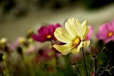 Garden, Garden Flowers, Space, Onętek #garden, #gardenflowers, #space, #onętek