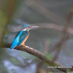 Liste des Oiseaux Athégiens (Athis-Mons) DaviddB