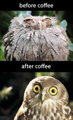 I always look like the owl before coffee- even when I drink coffee (which I hardly ever do cause it tastes nastaaaayyy)