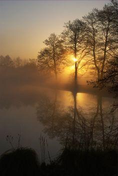 Sun on pond through haze and trees