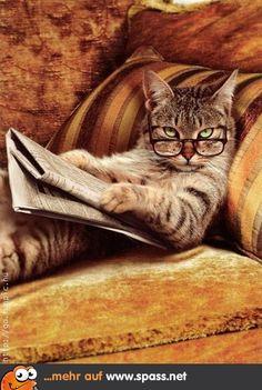Katze Zeitung