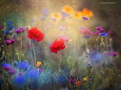 Monet's Garden by Magda  Bognar on 500px