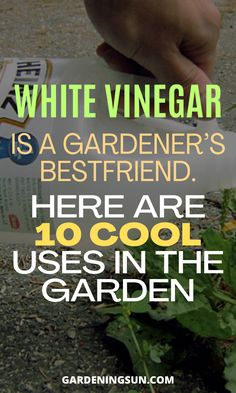 Organic Gardening, Gardening Tips, Indoor Plants, Indoor Outdoor, Gutter Garden, Area Units, White Vinegar, Edible Garden, Garden Planning