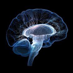 El cerebro humano se ilustra con peque os nervios interconectados