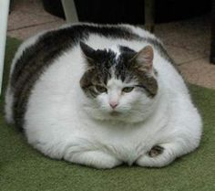fat cat. And I thought mine was fat!!