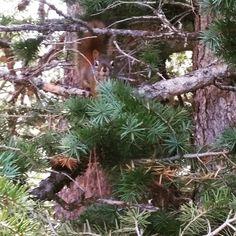 #vedawoo #morningsun #hikingtrail #hike #wyoming #chickaree #wildlife #turtlerock #turtlerocktrail #medicinebownationalforest #nationalforest #nature