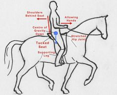 The challenge of sitting on a horse in balance may appear no more complex than any other form of balancing - just a case of getting your bearings and learning to go with the horse. In fact, there is a lot more to it than that, because on a horse, our natural balancing reflexesdo notlead us to sit