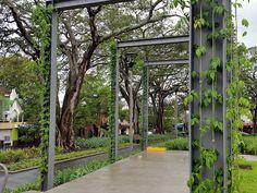 Foley Rest Park, cable trellis | Tensile Design & Construct