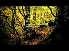 Som da floresta
