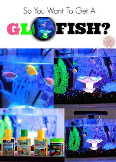 So You Want A GloFish? Check out our complete review of the 3 gallon aquarium from Walmart.