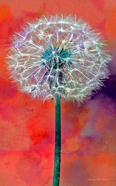 Dandelion Art by Seymour . Dandelion Painting, Easy Flower Painting, Flower Art, Watercolor Flowers, Watercolor Paintings, Paint And Drink, Dragonfly Art, Orange Art, Painting Inspiration