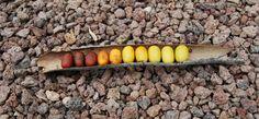Farbverlauf Eicheln