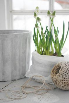 bulbs,..twine...cheesecloth .....some of my favorite things to use