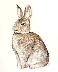 Morning #rabbit #Etsy #illustration #wildlife #brown #animal #art #illustrationoftheday #watercolour #london