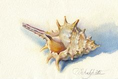 Hey, I found this really awesome Etsy listing at https://www.etsy.com/listing/229526084/seashell-painting-sea-shell-watercolor