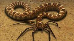 10 Weirdest Animal Hybrids That Actually Exist
