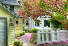 There is something I really like about this...white picket fence, pretty lined sidewalk...???  I just like it!