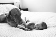babies & dogs - glass lilac photography