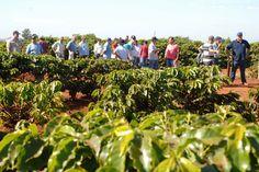 Iapar faz dia de campo sobre mecanização na cafeicultura adensada