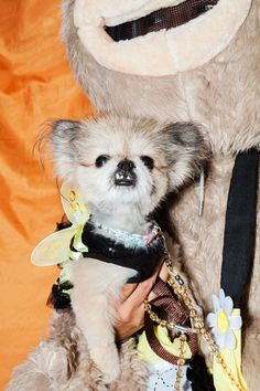 These Dogs In Costumes Are The Best Thing You'll See All Week #refinery29  http://www.refinery29.com/2016/10/127501/halloween-dog-costumes-tompkins-square-nyc#slide-19  Bumblebee? Flower power? We're not sure, but she's still a winner in our book....