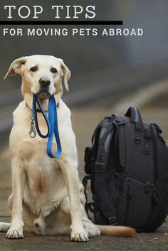Everything you need to know about moving your pets overseas - from someone who has done it!