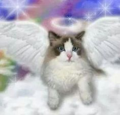 Cat Heaven Stop your cats from spraying in your home. Gato Angel, Pet Loss Grief, Cat Heaven, Kitten Images, Frida Art, Les Gifs, Angel Pictures, Here Kitty Kitty, Baby Kitty