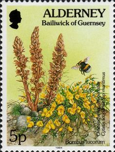 Google Image Result for http://i970.photobucket.com/albums/ae187/uncadonego/morestamps/bombus.jpg