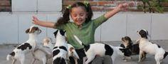 Hermosa niña jugando con sus mascotas