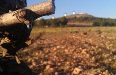 Primeras lágrimas de la cosecha 2014 #lamancha