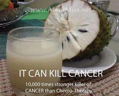 The Sour Sop or the fruit from the graviola tree is a miraculous natural cancer cell killer 10,000 times stronger than Chemo.