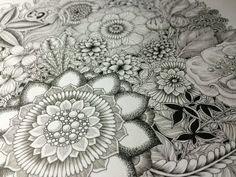 Botanical drawings by Noah's ART