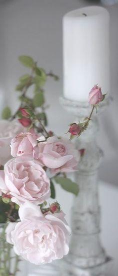 ❧ Roses ❧